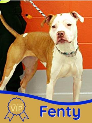 photo of adoptable pets