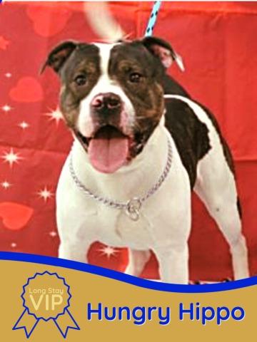 photo of adoptable dog