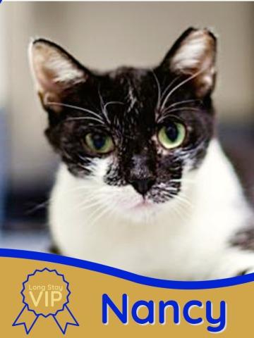 photo of adoptable cat